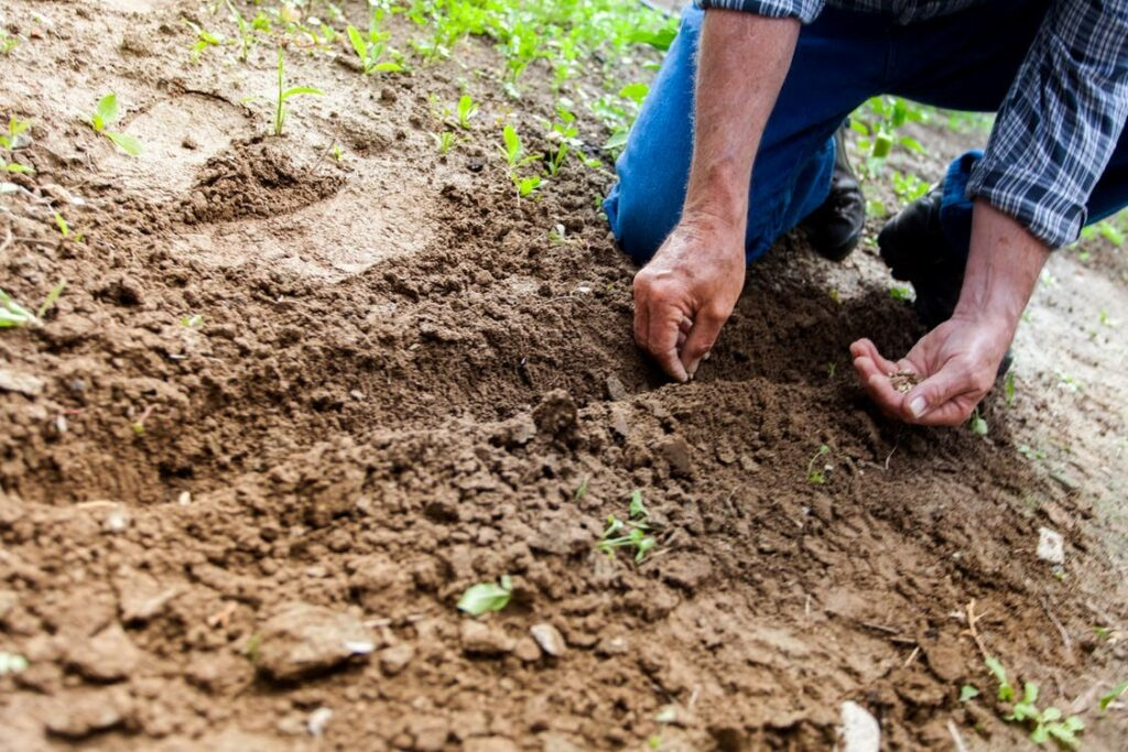 a farmer sowing seeds